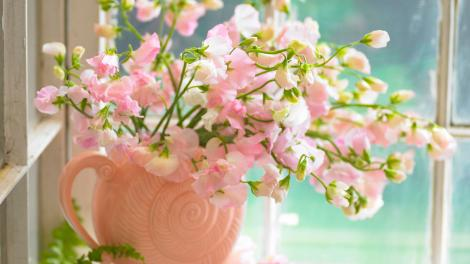 Pink flowers in a vase on the window sill.